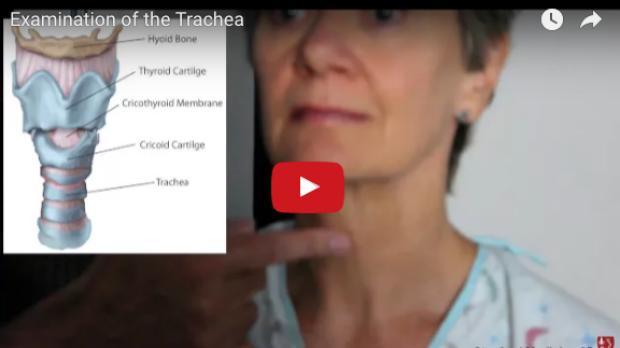 Examination of the Trachea