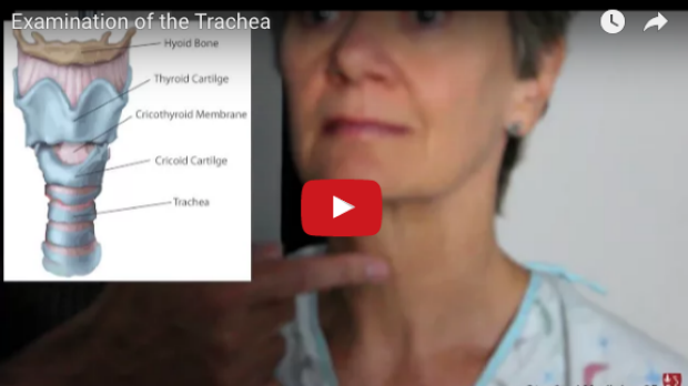 Examination of the Trachea